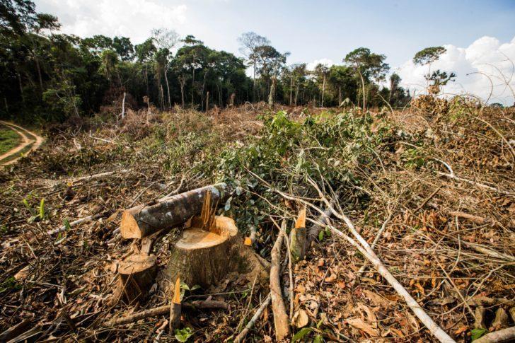 Perícia é imprescindível se há vestígios de crime ambiental