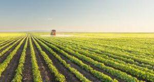 Defensivos agrícolas